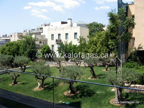 Ancient olive trees outside of the Museum